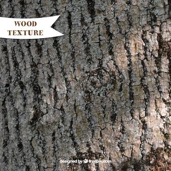 Struttura di vecchio tronco d'albero