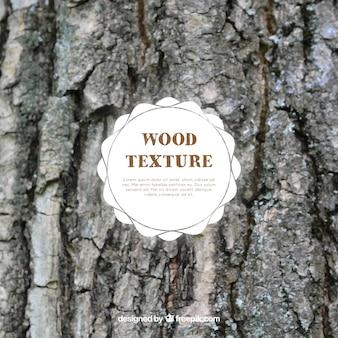 Texture tree trunk