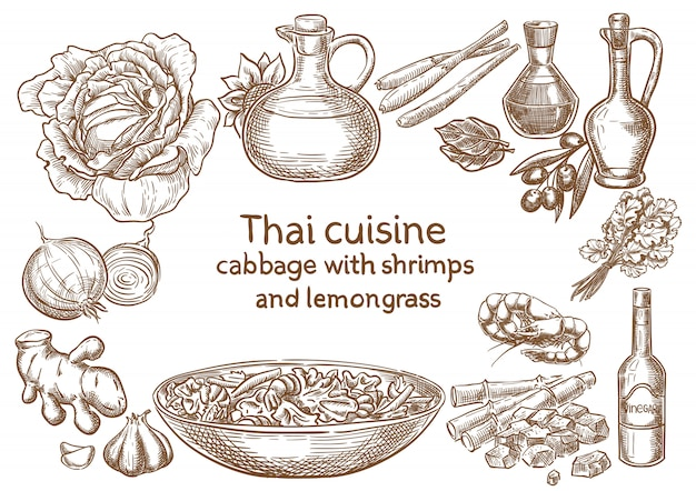 Thai cuisine. cabbage with shrimps and levjngrass ingredients vector sketch.
