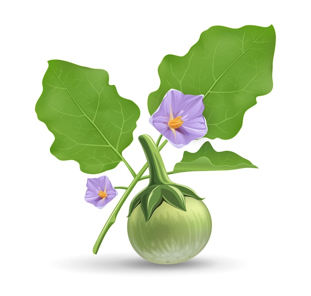 Тайский баклажан и зеленый лист с фиолетовым цветком реалистичный дизайн на белом фоне