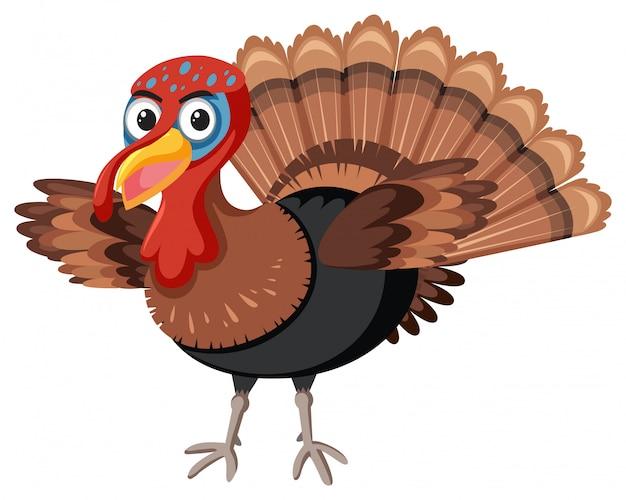 Thanks giving turkey white background