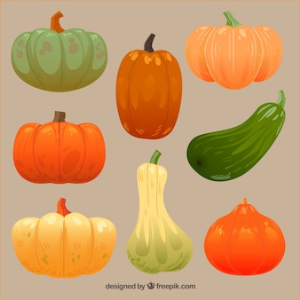 Thanksgiving pumpkins set
