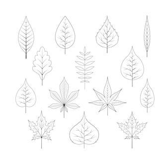 Контур осенних листьев.