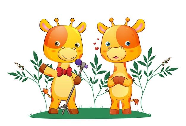 Пара певцов жирафов поет вместе в парке.