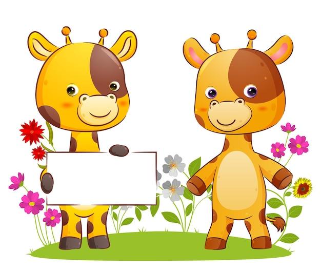 Милая пара жирафов держит пустую доску новостей в парке