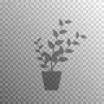 식물 꽃의 그림자 오버레이 효과