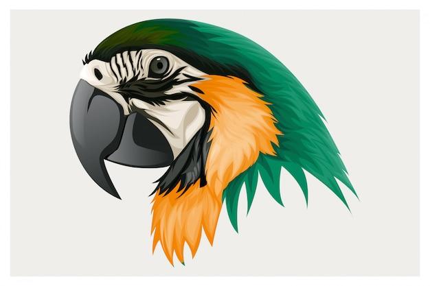 깃털이 달린 앵무새는 녹색과 노란색입니다.