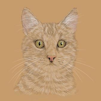 口ひげを持つ猫の頭。鉛筆の手描きのスケッチは、白い背景で隔離。