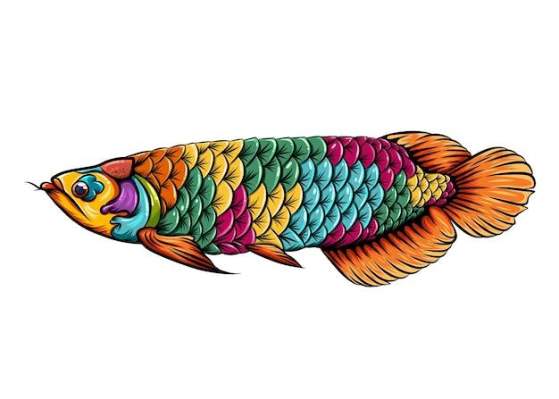 몸에 아름다운 색깔을 가진 아로와나 물고기 zentangle의 일러스트
