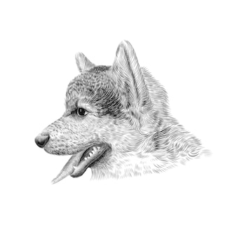 ペンブロークウェルシュコーギートリコロールの子犬。ペットの横顔の肖像画、クローズアップスケッチ。図。