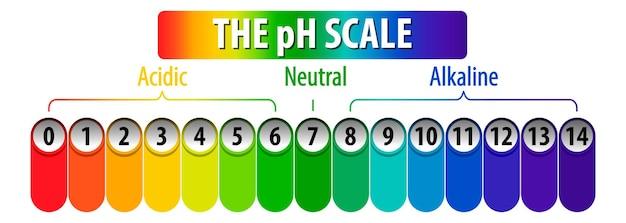 흰색 배경에 ph 규모 다이어그램