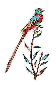 Хвостатая мухоловка на стеблях листьев