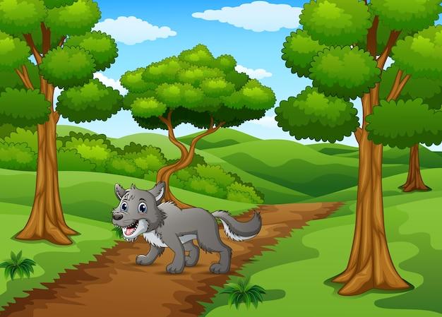 숲 언덕 길을 걷는 늑대