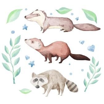 이 수채화 동물 세트는 3 종의 동물, 너구리, 수달, 야자 사향으로 구성됩니다.