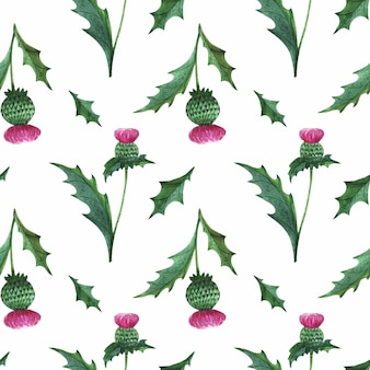 Thistle flower watercolor seamless pattern