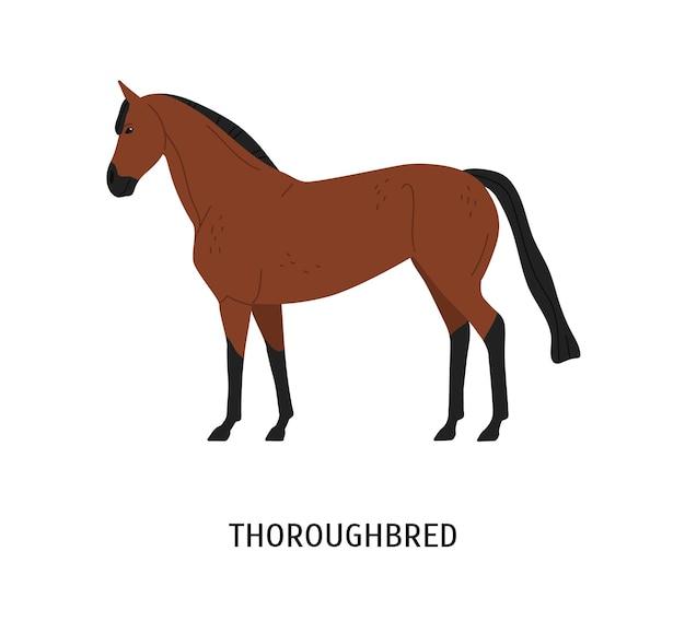 Чистокровная лошадь плоская векторная иллюстрация. красивая коричневая скаковая лошадь для конного спорта, изолированные на белом фоне. изящный жеребец каштанового окраса. дорогая породистая кобыла. красивый конь.