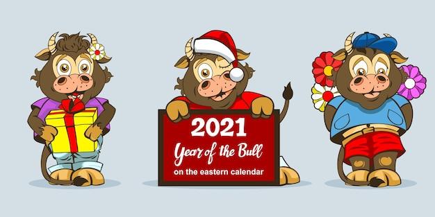 축제 장식이나 새해 복 많이 받으러 다른 전장 포즈의 세 아기 황소.