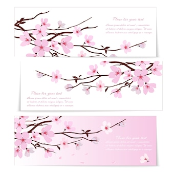 Three banners with fresh pink ornamental sakura flowers or cherry blossom