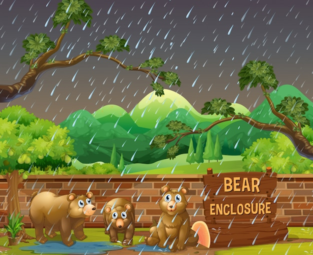 Three bears in the zoo on rainny day