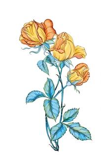 分離された3つの美しい黄色のバラ