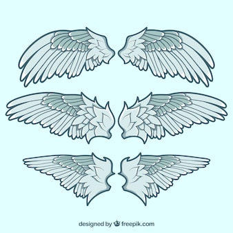Three decorative wings in flat design