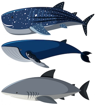 Whale vectors photos and psd files free download three different types of sharks altavistaventures Image collections