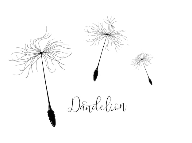 Three flying seeds of a dandelion for decoration
