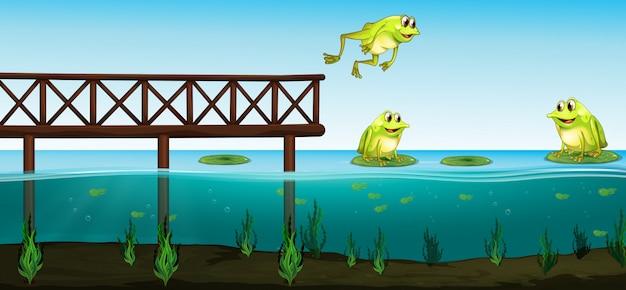 연못에 세 개구리