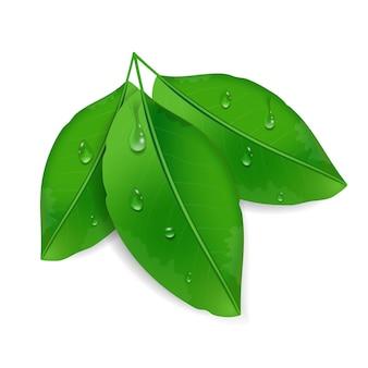 白い背景に分離された露滴と3つの緑の葉。水滴を使った環境デザイン。