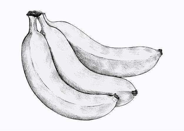 Tre banane fresche disegnate a mano