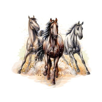 Three horses run gallop from a splash of watercolor, hand drawn sketch.  illustration of paints