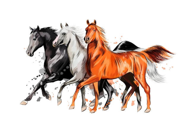 Three horses run gallop from a splash of watercolor, hand drawn sketch.