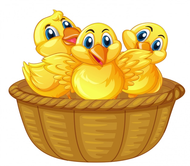 Three little chicks in basket
