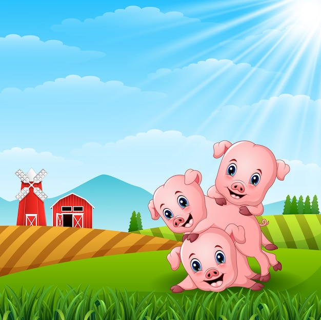 Three little pig playing together