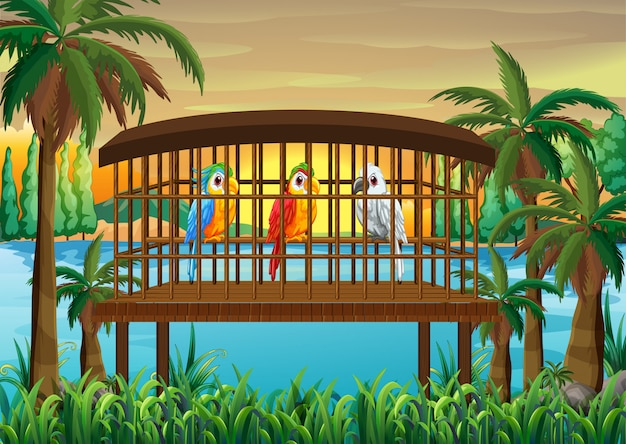 Three macaw parrot birds in wooden cage
