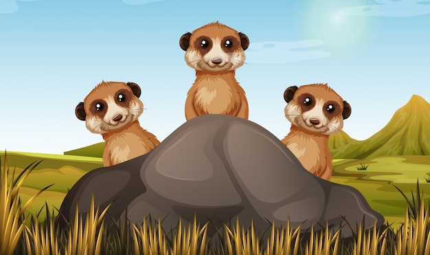 Three meerkats behind the stone