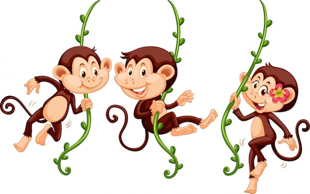 Three monkeys swinging on the vine