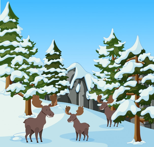 Three mooses in the snow mountain