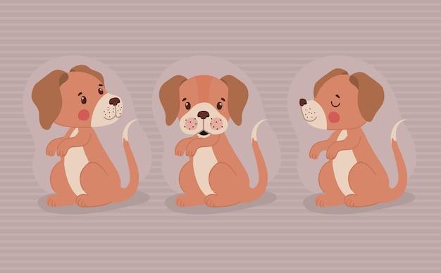 Three pretty pups