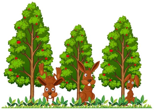 Tre conigli nel campo