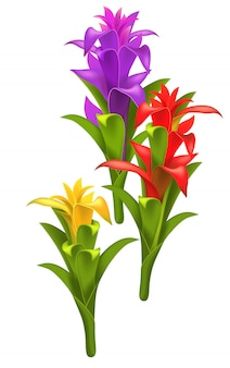 Three realistic red, purple and yellow guzmania flowers.