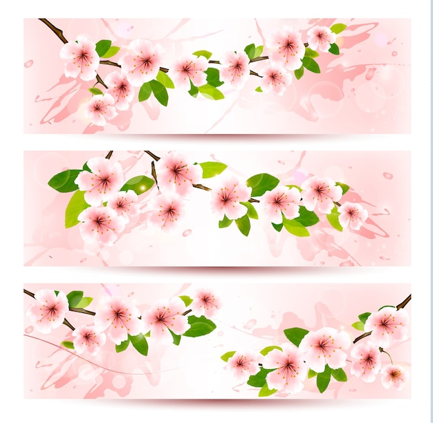 Three spring banners with blossoming sakura brunch with spring flowers.