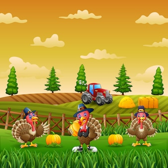 Three of turkeys in the pumpkin garden illustration