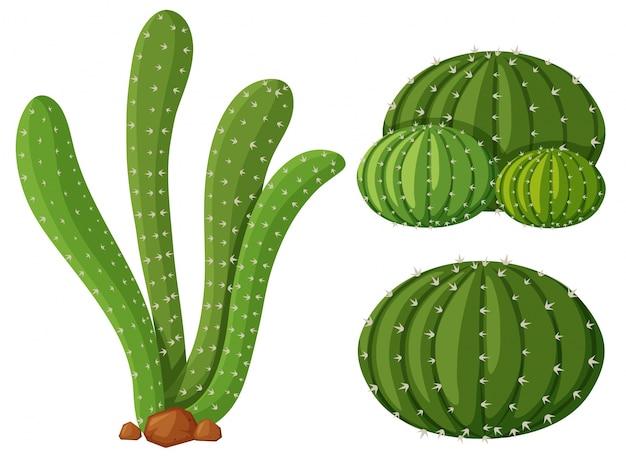 サボテン植物の3種類のイラスト