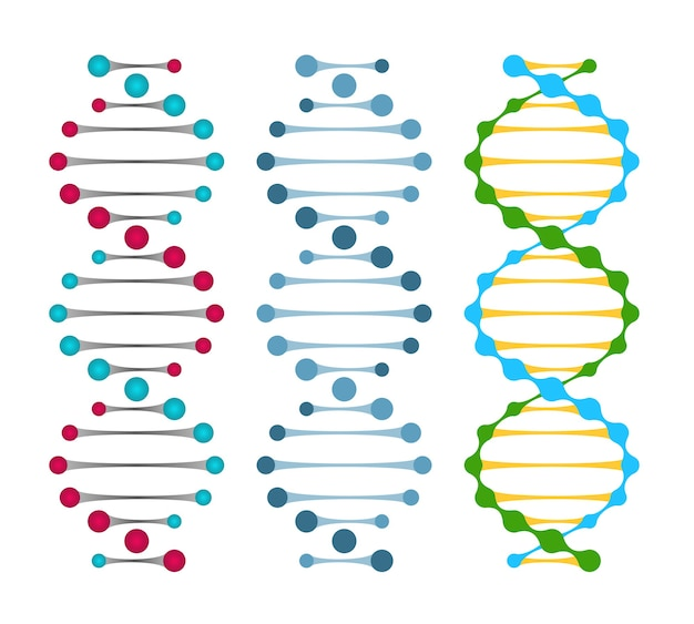 Three variants of double strand dna molecules showing the nucleotide pairs in a double helix  vector illustration