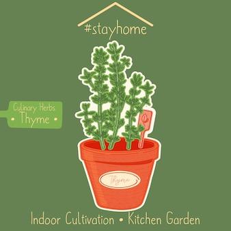 Thyme in a kitchen garden