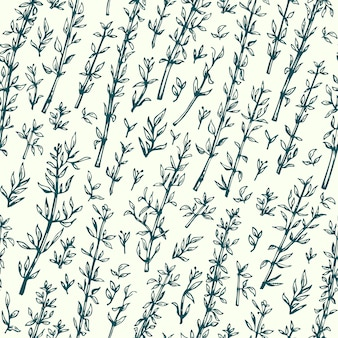 Thyme. vector seamless pattern. hand drawn vintage illustration