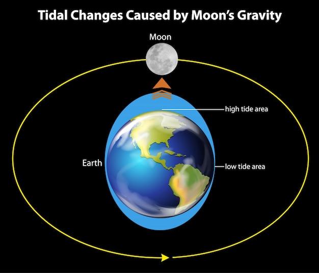 Tidal movements on earth