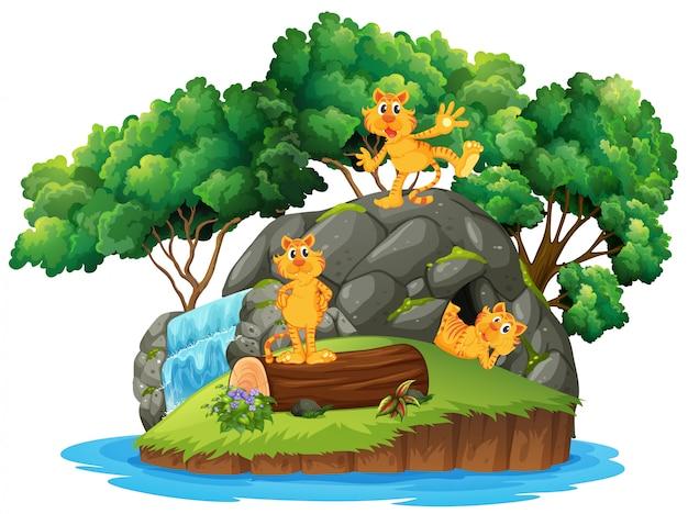 島の洞窟で虎