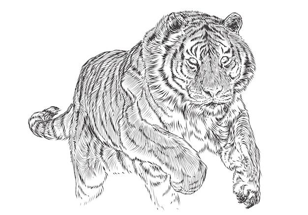 Tiger attack hand draw эскиз черной линии монохромный.